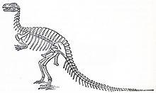 Humped_Megalosaurus
